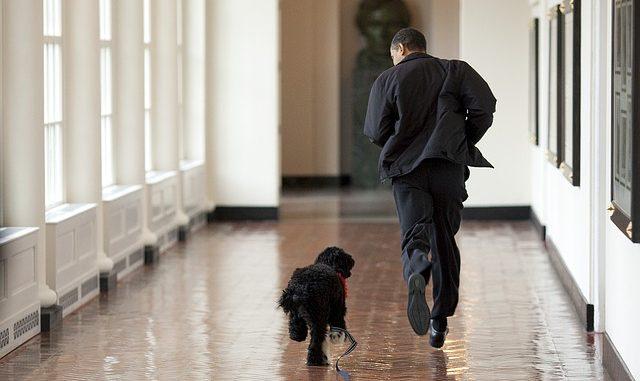 obama court avec son chien